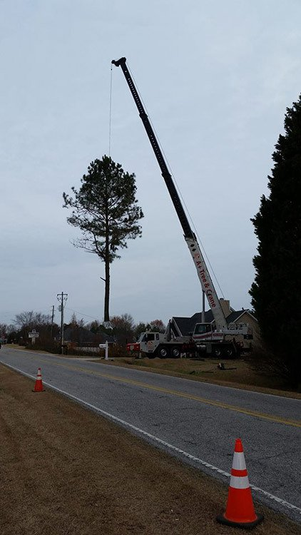 Triangle Tree Service