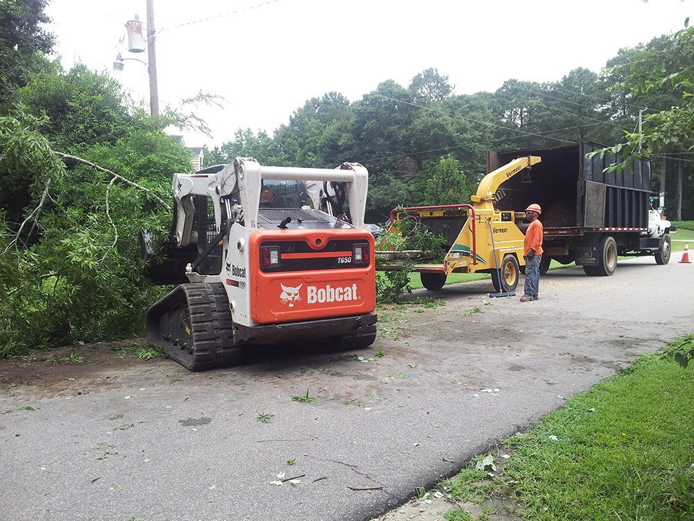 Tree Service Raleigh