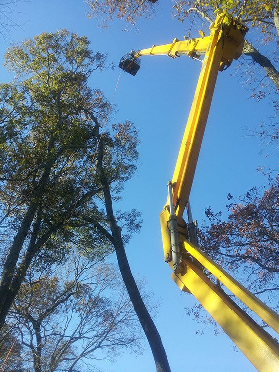 Tall Tree Removal