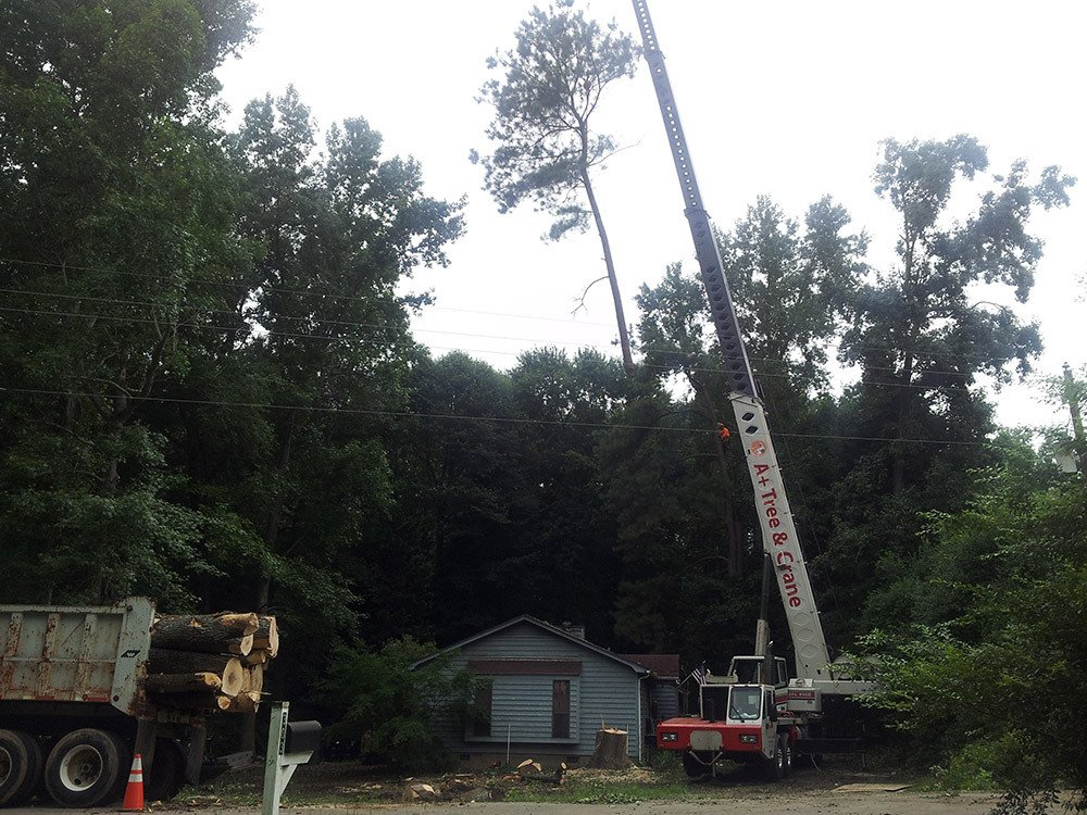 Tree Removal Contractors