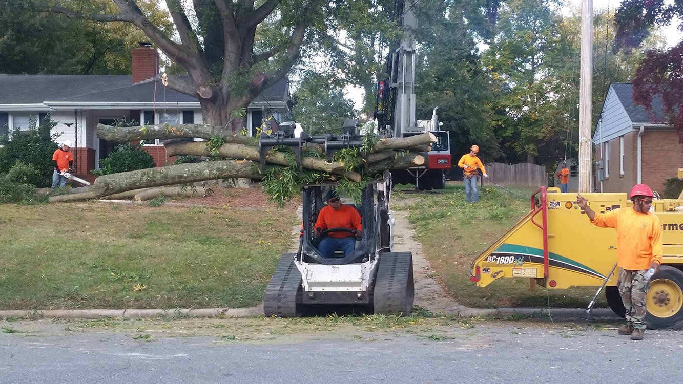 Raleigh a tree crane service gallery tree stump removal for Tree and garden services