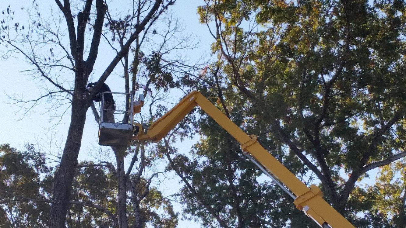 Tree Service Company
