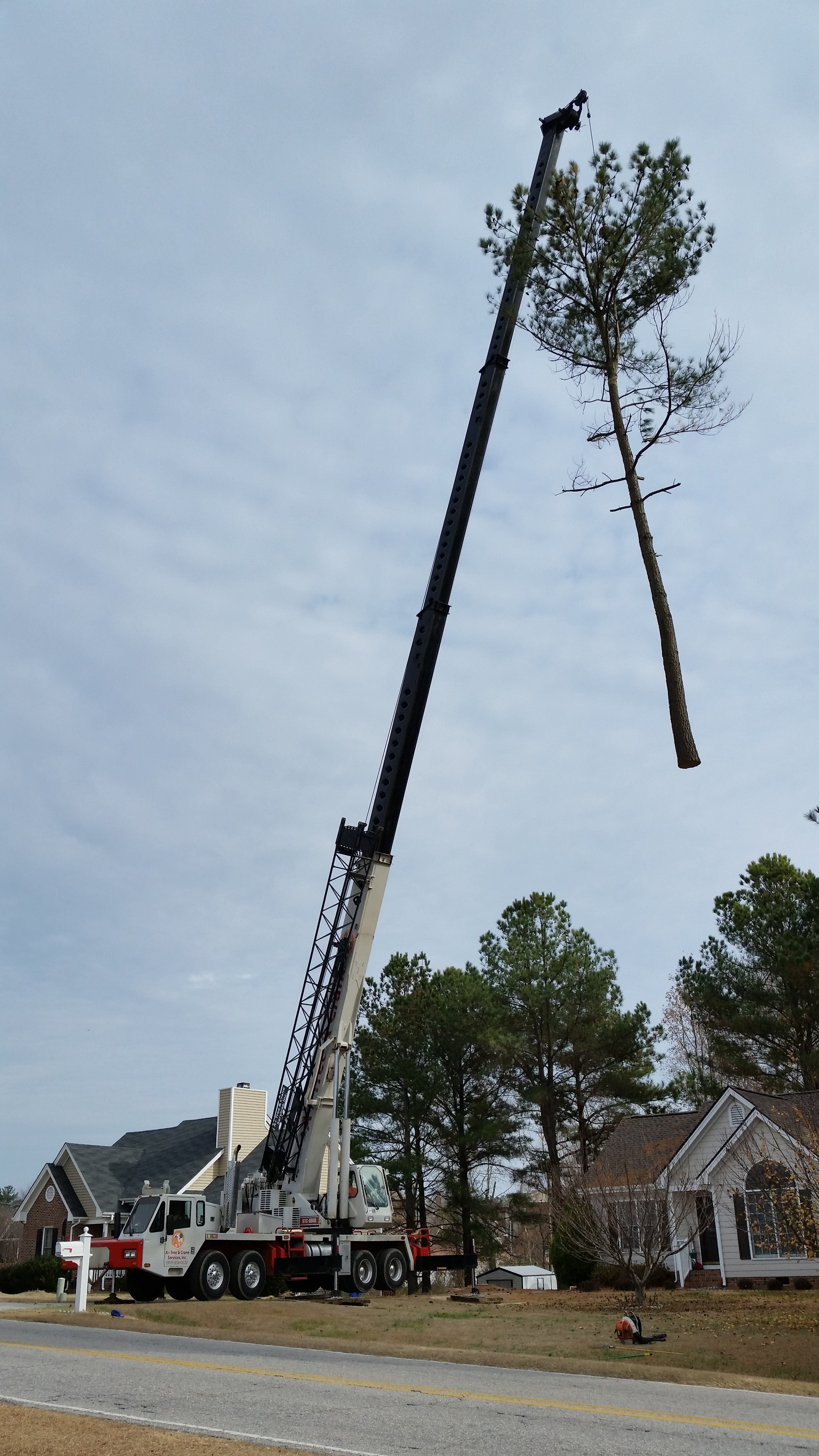 Residential Tree Service