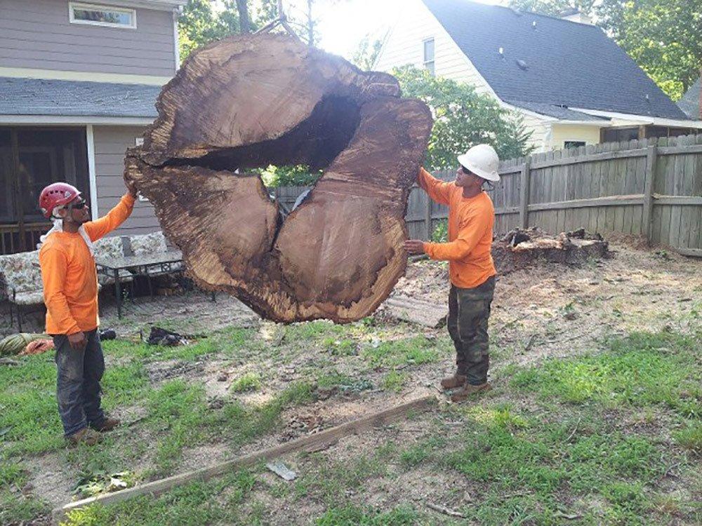 Tree Trunk Service