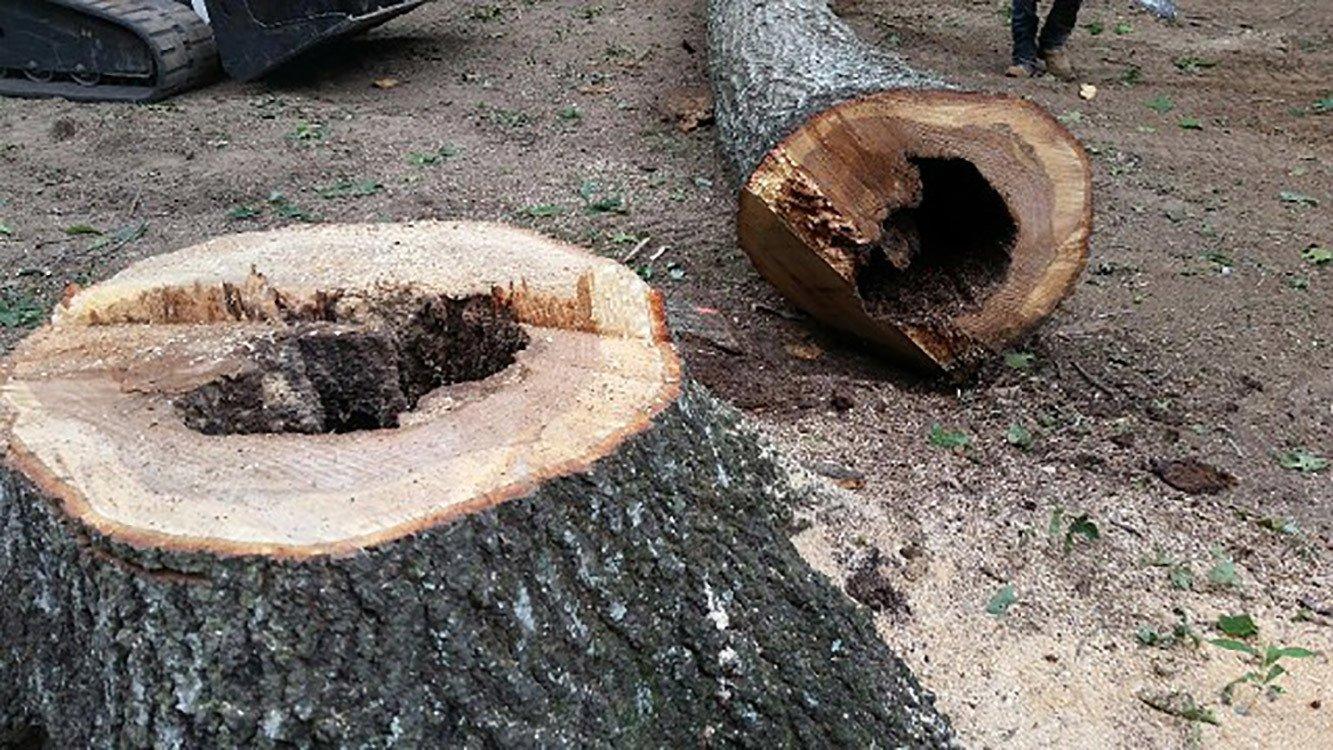 Arborist Service
