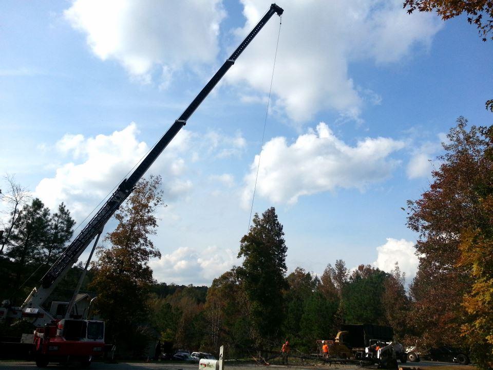 tree removal service cary north carolina