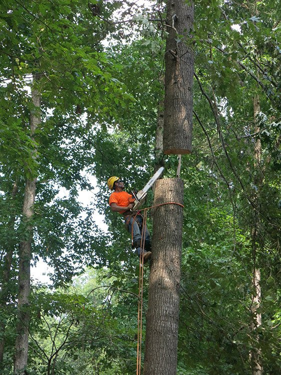 Tree Services Raleigh