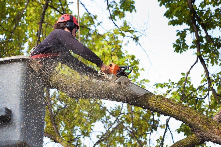 tree removal knightdale