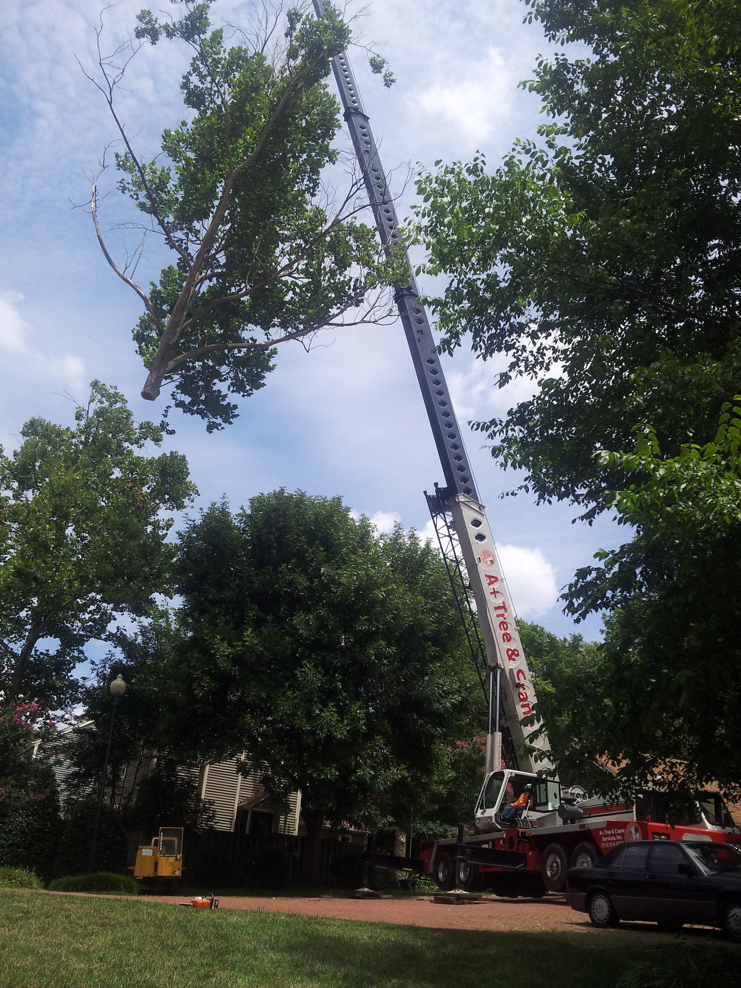 Garner Tree Removal  | A+ Tree & Crane Team