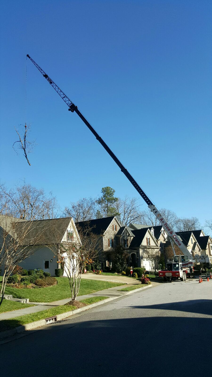 crane picks up tree from behind house