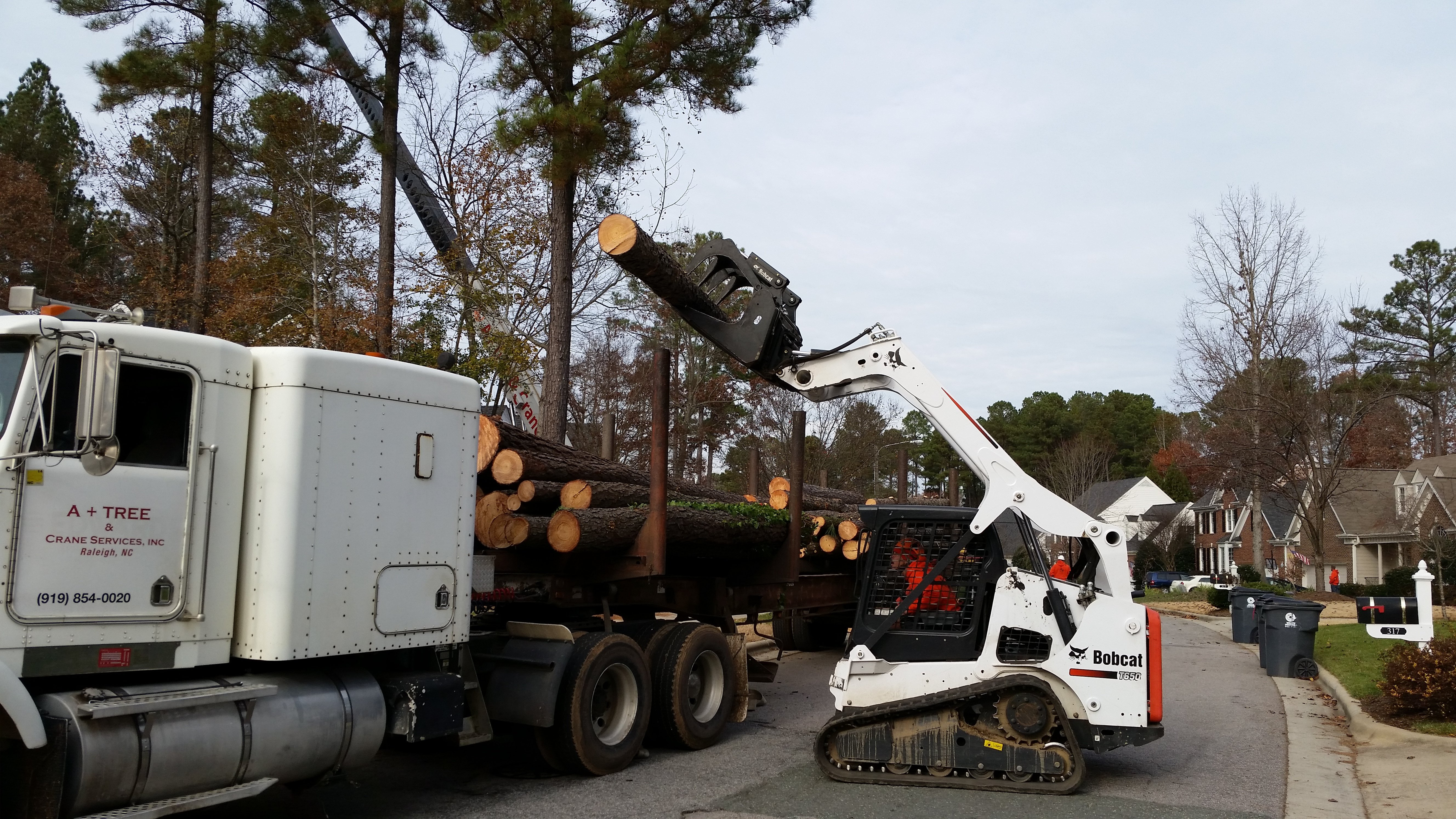 grapple loader and bobcat load logs and debris