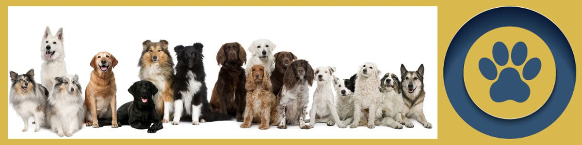 kardinia veterinary clinic and animal hospital group of puppies and dogs