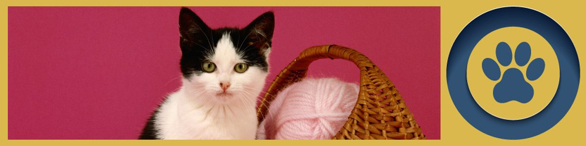 kardinia veterinary clinic and animal hospital kitten in pick background with basket