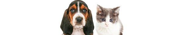 kardinia veterinary clinic and animal hospital dog and cat