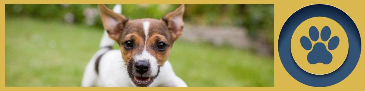 kardinia veterinary clinic and animal hospital puppy playing