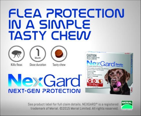 NXGD Advert_70x85mm_Flea1