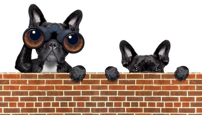 two watch dogs keeping an eye on their digital advertising campaigns
