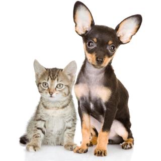 adozioni cuccioli