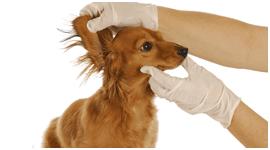 sistemi di identificazione per animali