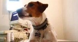 Pronto Intervento Veterinario Cani