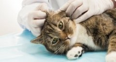 Pronto Intervento Veterinario Gatti