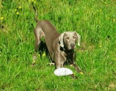 Pensione per Cani Cà del LUF