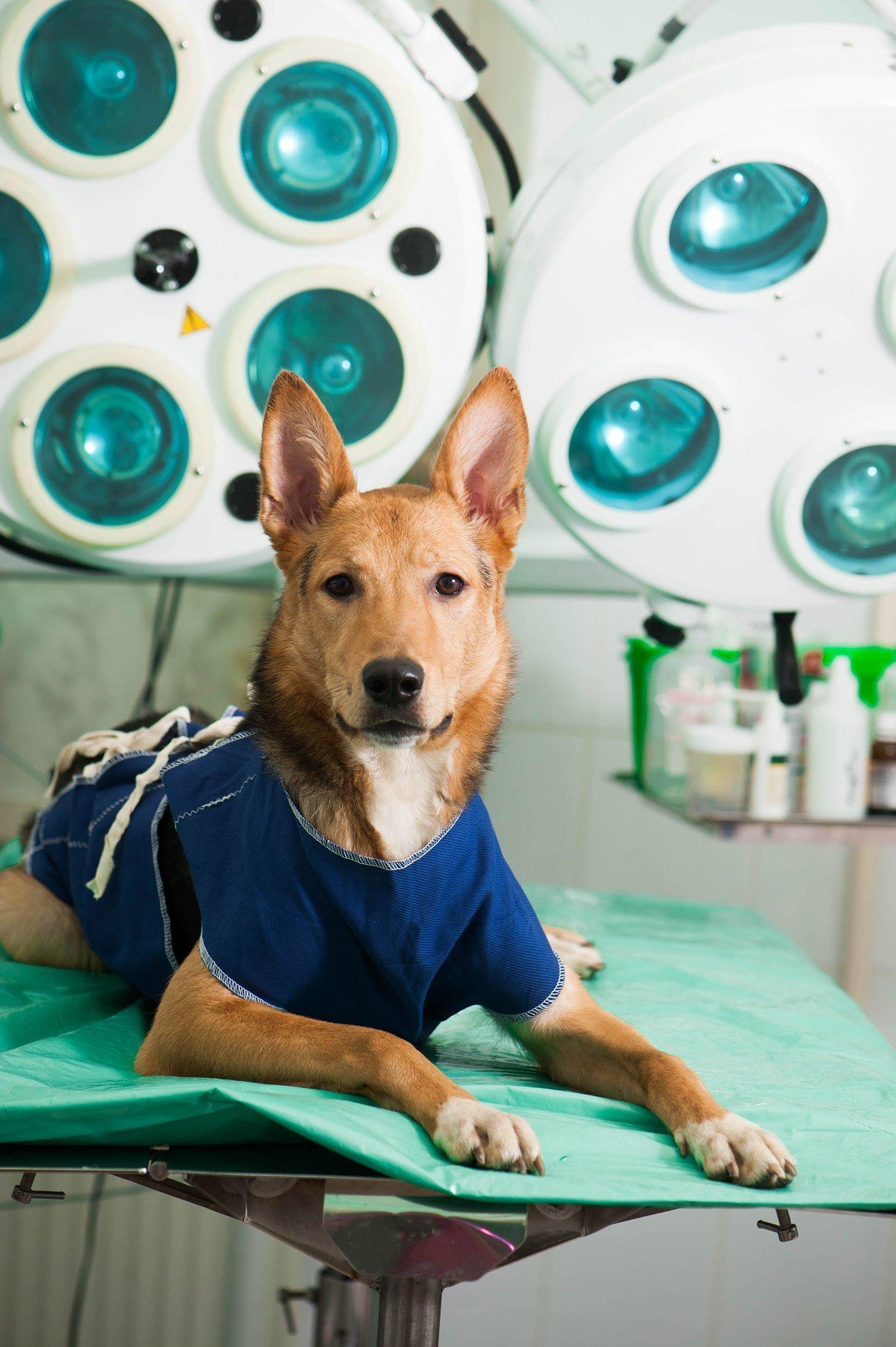 cane in sale operatoria