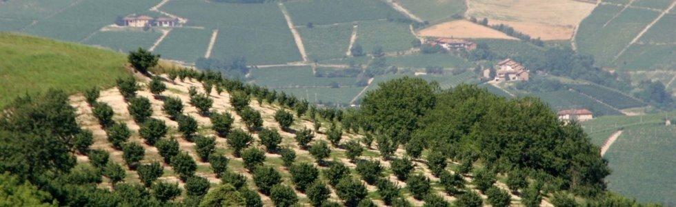 coltivazione nocciole