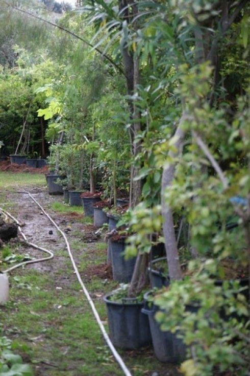 piante per orto