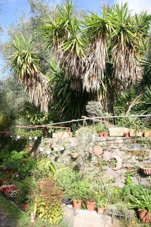 piante da sole