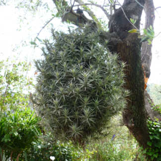 piante a caduta