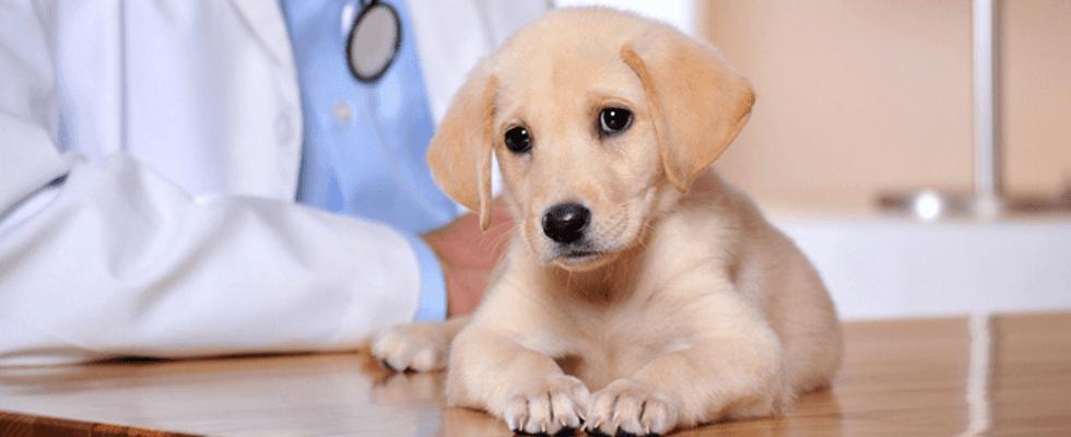 profilassi animali domestici