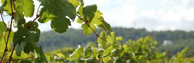 Consulenza viticoltori