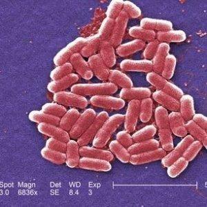 Batterio resistente a tutti gli antibiotici