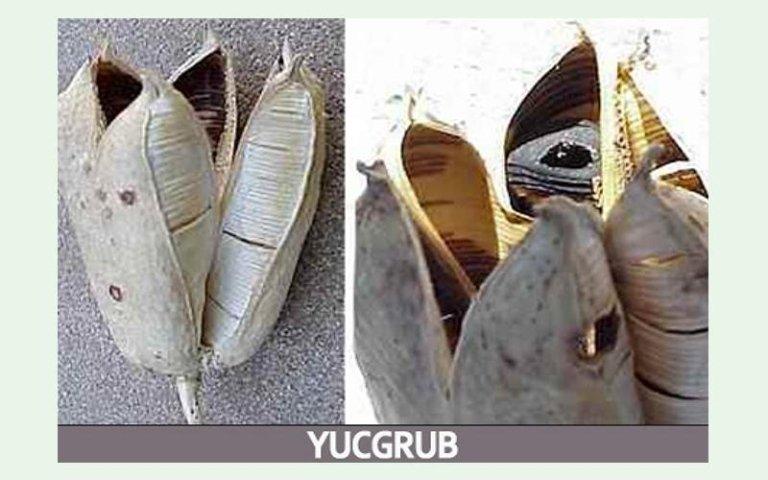 Yucgrub