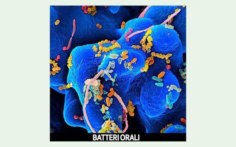 Batteri orali