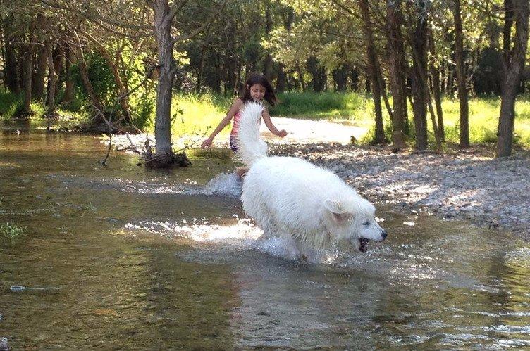 Ragazza che insegue un cane in acqua