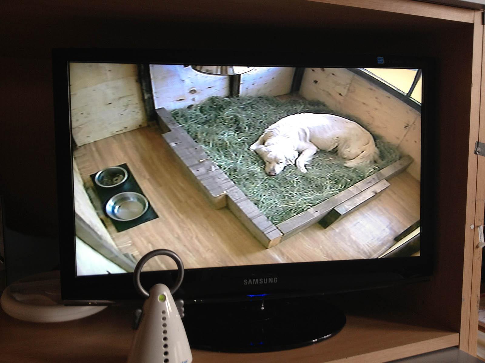 un monitor con l'immagine di un pastore sdraiato sopra dell'erba