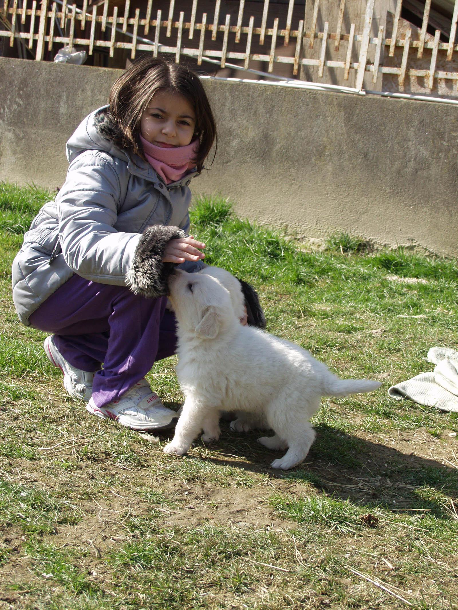 una bambina che gioca con un cucciolo di pastore maremmano