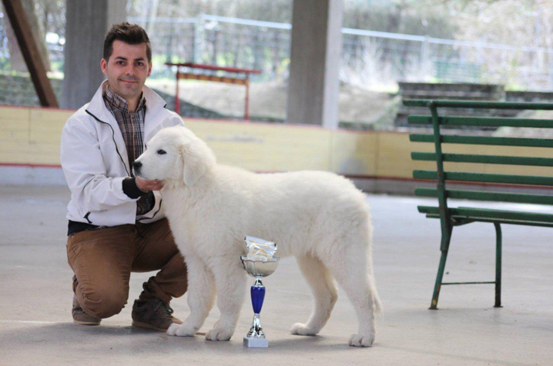 premiazione di un pastore maremmano