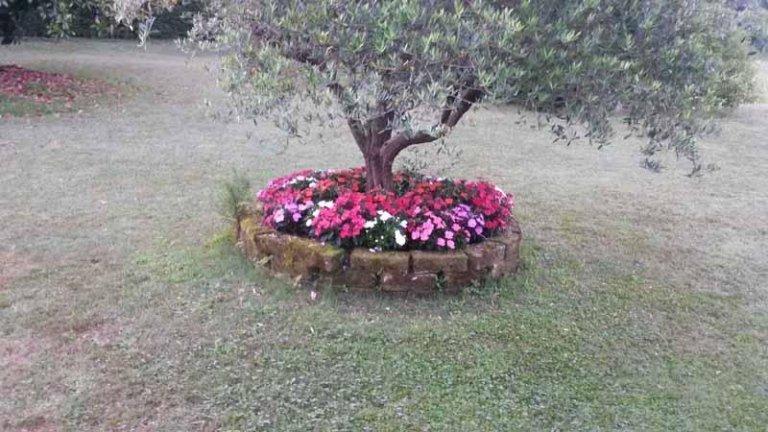 Floricoltura Macchi