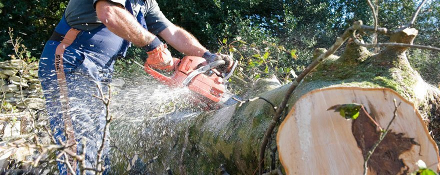 Specialist tree felling services