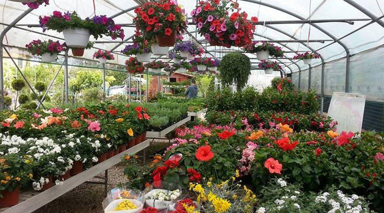 Piante fiorite al Vivaio Piantiamola