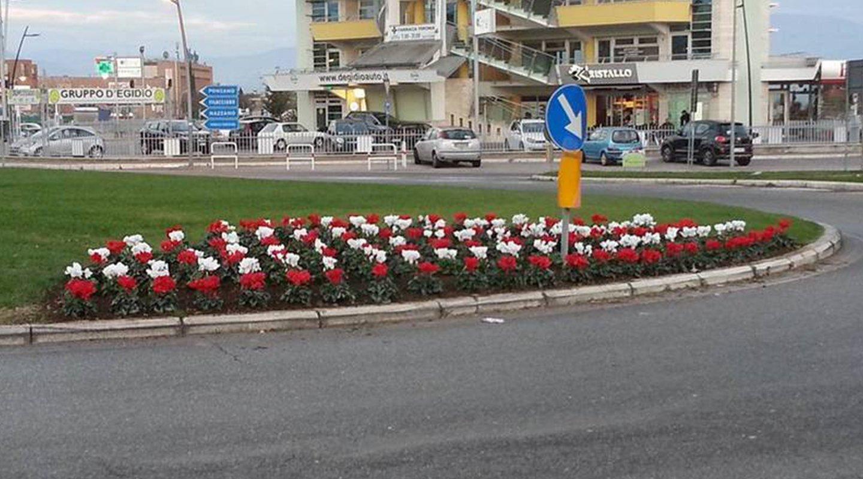 Piante fiorite lungo la strada