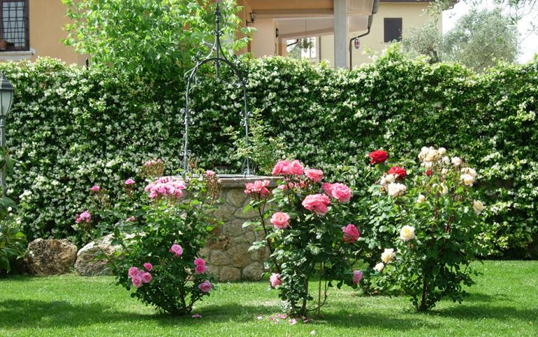 piante colorate in un giardino