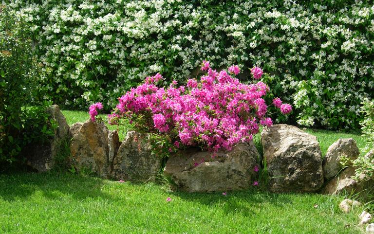 pianta con fiori fucsia