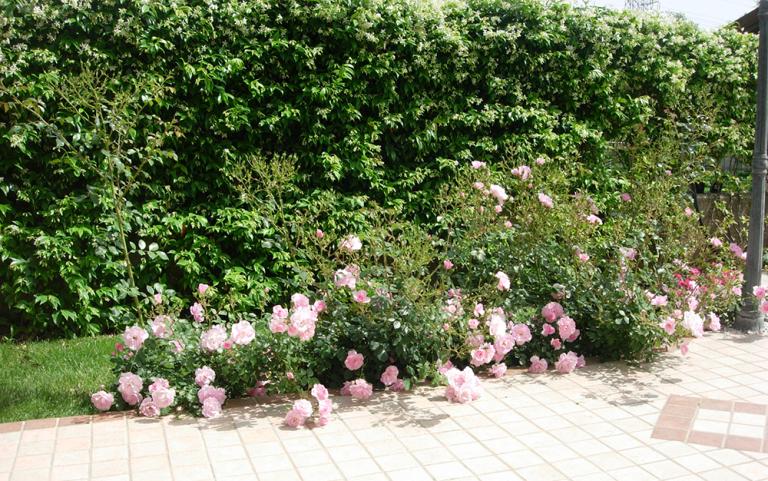 Siepe con piante fiorite