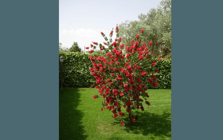 pianta con frutti rossi