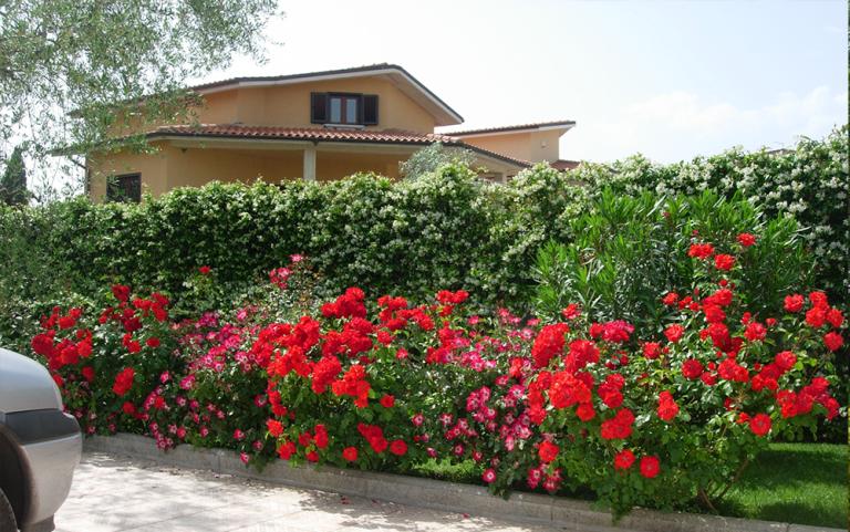 vista angolare di un giardino con piante rosse