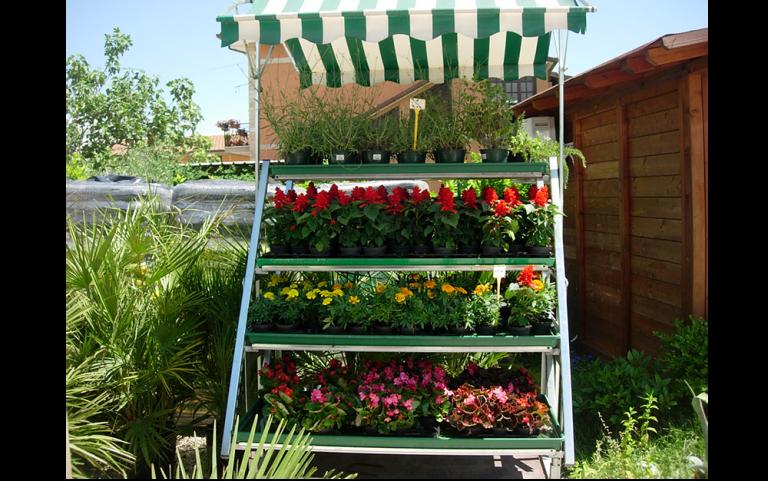 stock di fiori colorati